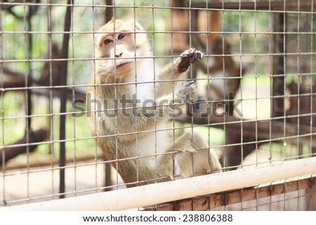 Caged Monkey looking out, Long Tailed Macaque - stock photo