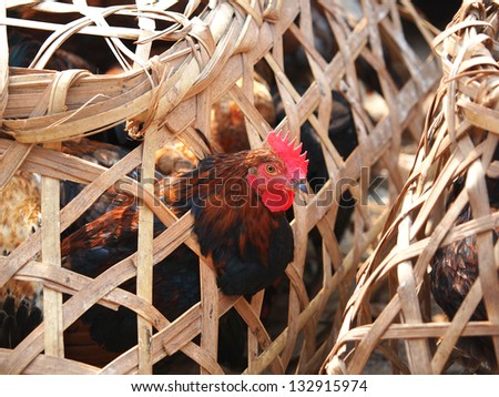 Caged Proud Rooster With Black and red Feathers For Sale at the Bird Market in kathmandu,Nepal - stock photo