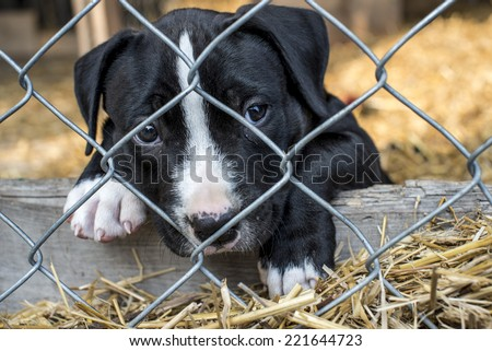 caged puppy waiting for adoption