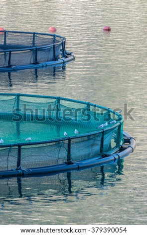 Cages for fish farming - stock photo