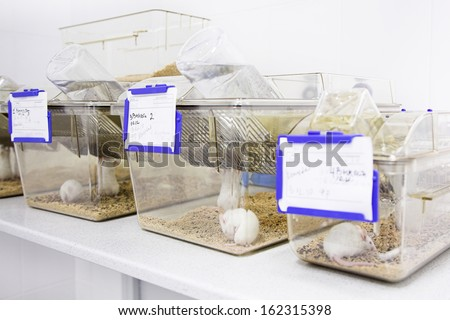 cages with white mouse in the biology laboratory  - stock photo