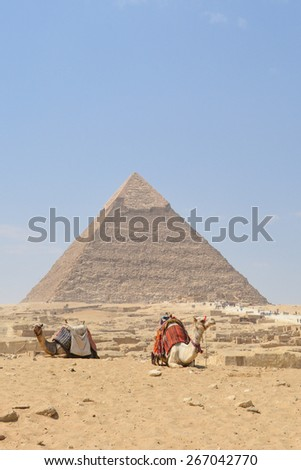 Cairo - Camels and Pyramid at Giza, Egypt - stock photo