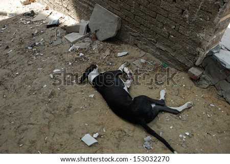 CAIRO - SEP 05: Dead dog jumped from a balcony as she got scared from the explosion in Mostafa Nahas st - Bomb was targeting the Egypt's interior minister. Cairo, Egypt on September 05, 2013 - stock photo