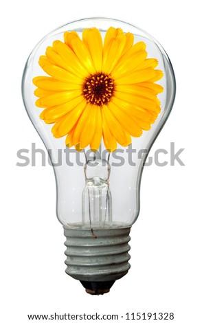 Calendula flower in lamp - stock photo