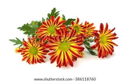 calendula flowers bouquet, natural background - stock photo