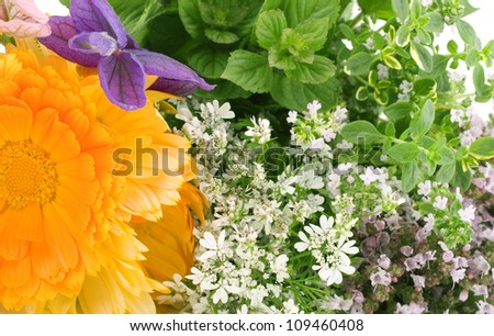 Calendula flowers, mint, origanum, salvia - stock photo