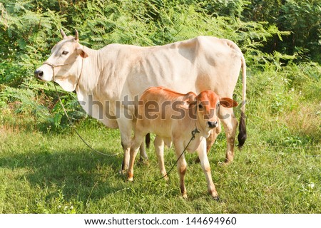 Calf and cow standing on a meadow - stock photo