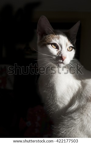 Calico Cat against dark background