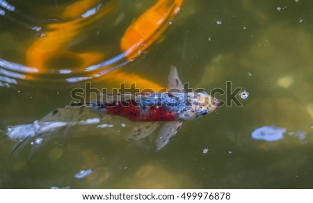 Stock images royalty free images vectors shutterstock for Fish swimming backwards