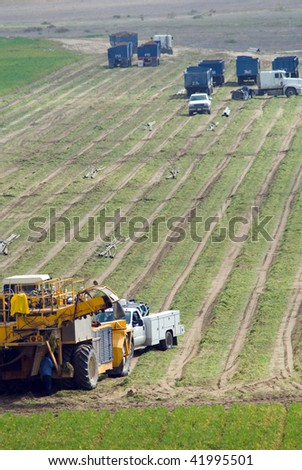 California carrot field: Mechanized harvesting equipment and loaded trailers are parked while irrigation pipes are removed