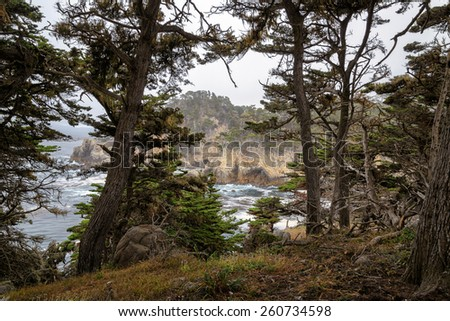 California Coast, the trees in Point Lobos State Natural Reserve - stock photo
