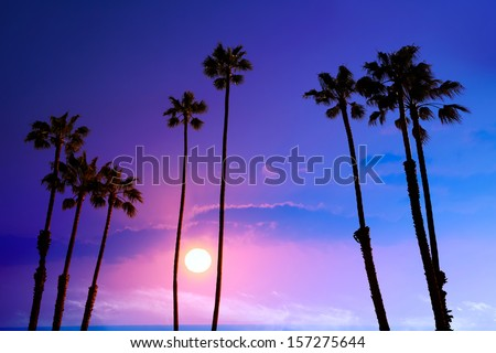 California high palm trees purple sunset sky silhouette background USA - stock photo