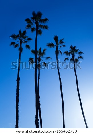 California high palm trees silohuette on blue sky USA