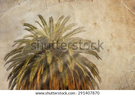 California palm trees in vintage style. - stock photo