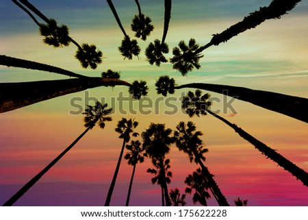 California Palm trees view from below in Santa Barbara US [photo illustration] - stock photo