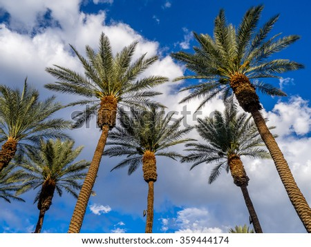 California Palms and the blue sky at a Palm Desert golf resort. - stock photo