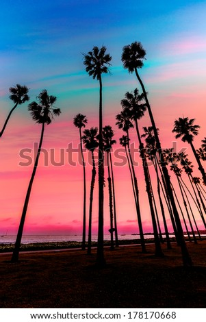 California sunset Palm tree rows in Santa Barbara US - stock photo
