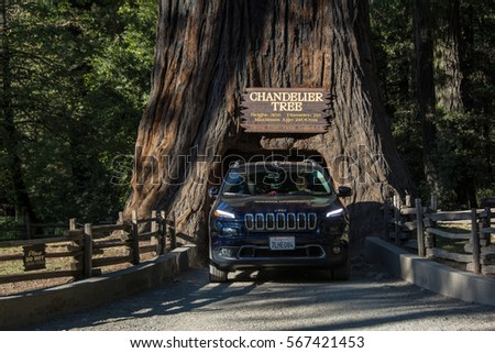 Chandelier Tree Stock Images, Royalty-Free Images & Vectors ...