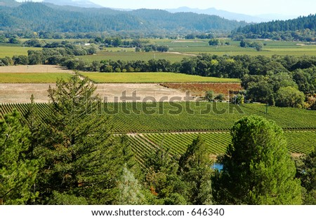 California vineyards, Napa