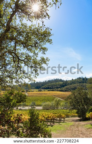 California wine country vineyard landscape with natural sun flare. Vertical with copy space - stock photo