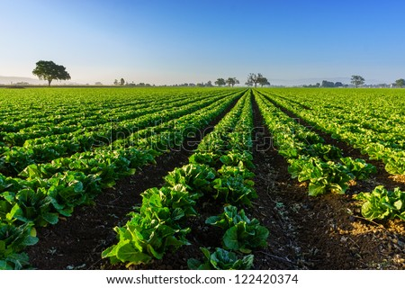 Californian farm, organic farming in California. - stock photo
