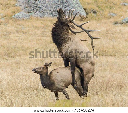 black singles in elk county Black river elk range herd update  significant support from the community for an elk reintroduction was received the black river elk  the jackson county elk.