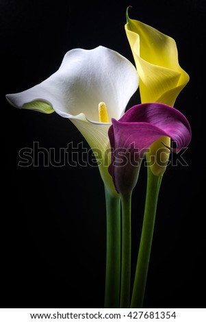 Calla, flowers, close-up, macro.  - stock photo