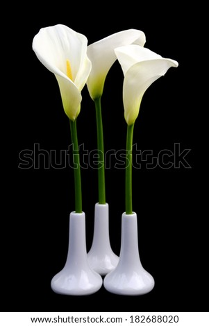 Calla lilies in white vases on black background - stock photo