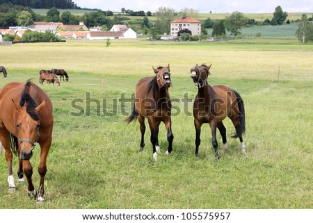 Calling brown Horses on the green Field