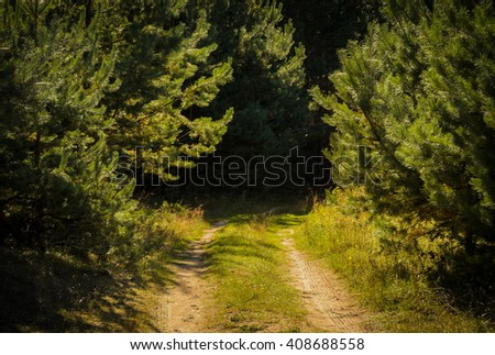 calm and warm forest road in sunlight - stock photo