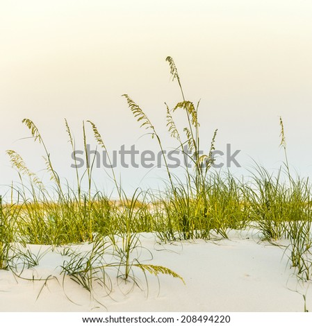 Calm beach with dunes and green grass in sunset - stock photo