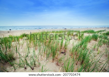 Calm beach with dunes and green grass. Ocean in the background, blue sunny sky. - stock photo