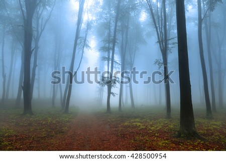 Calm foggy forest with morning mist - stock photo