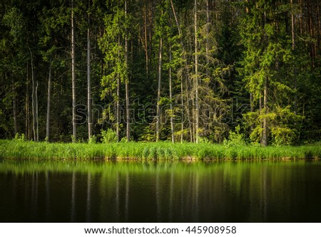 calm forest lake, summer day - stock photo
