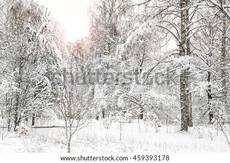 Calm, frozen forest covered in snow in the Swedish countryside. - stock photo