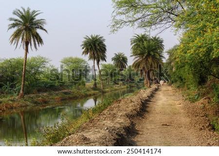 Calm jungle landscape - stock photo