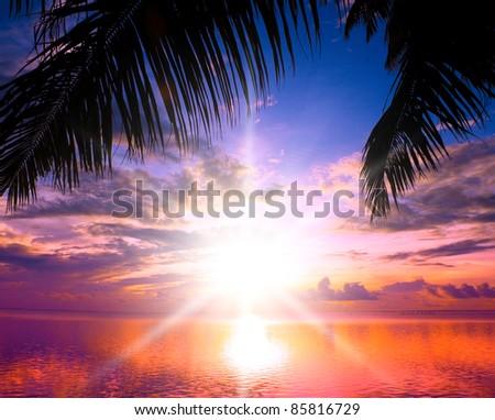Calm Ocean Under Palm - stock photo