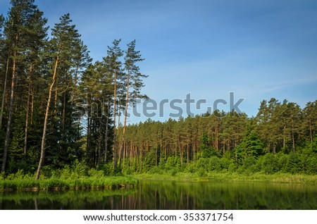 calm river running through the pine forest - stock photo