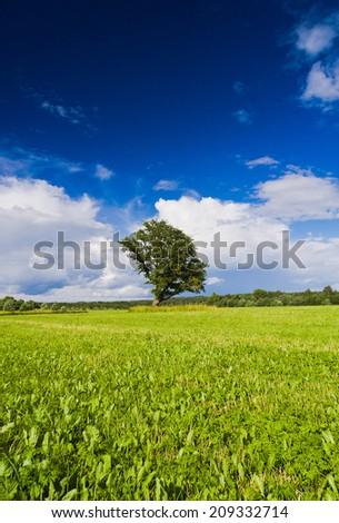 Calm Solitude Lonely Tree  - stock photo