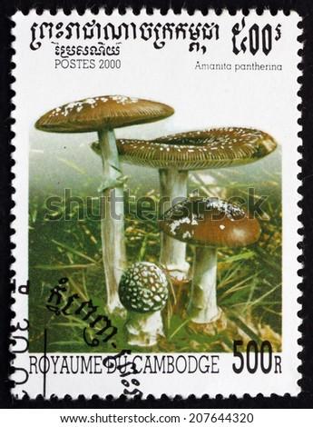 CAMBODIA - CIRCA 2000: a stamp printed in Cambodia shows Panther Cap, Amanita Pantherina, Mushroom, circa 2000 - stock photo