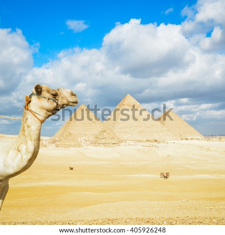 Camel and Giza Pyramids - Cairo, Egypt - stock photo