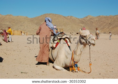 Camel and the boy