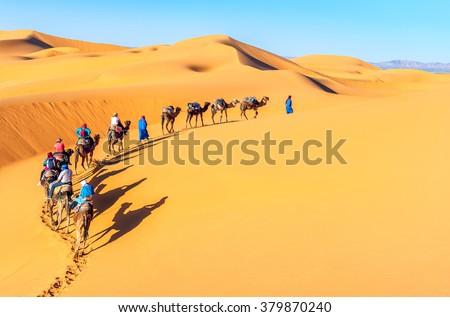 Camel caravan going through the sand dunes in the Sahara Desert, - stock photo