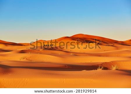 Camel caravan going through the sand dunes in the Sahara Desert, Merzouga, Morocco - stock photo