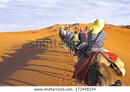 Camel caravan going through the sand dunes in the Sahara Desert, Morocco. - stock photo