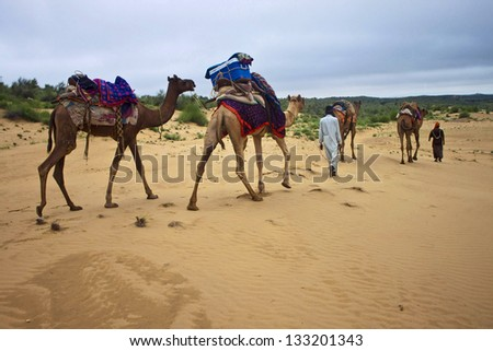 Camel caravan in Thar desert, India