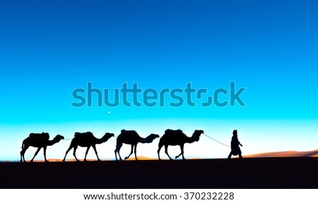 Camel caravan on the Sahara deser - stock photo
