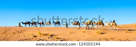Camel caravan on the Sahara desert in profile against a bright blue sky.  Panorama. - stock photo