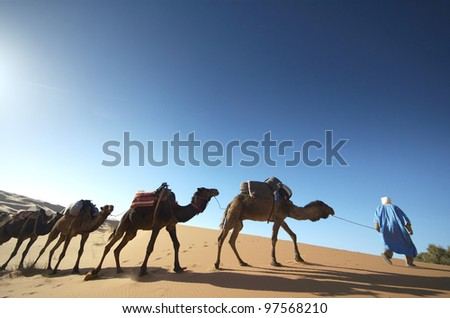 Camel caravan walking over sand dune at - stock photo