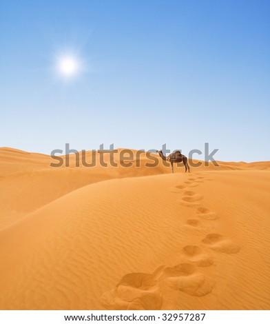 camel in desert - stock photo